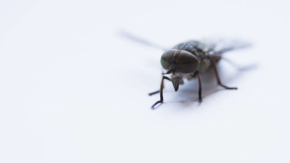 Eine Fliege macht noch keinen Wahlsieg - Makrtkommentar