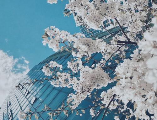 Zwischen Saisonalität und Zinsangst