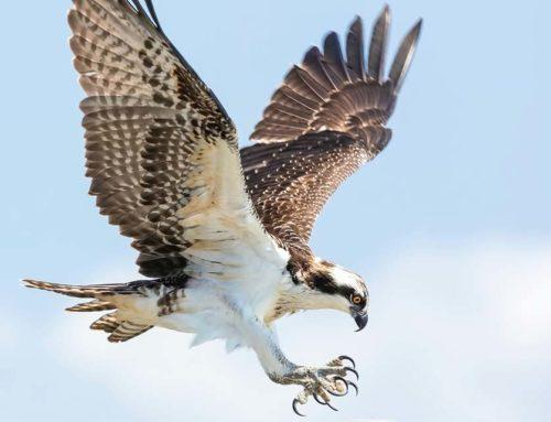 Falken vs. Tauben: Machtkampf in derEZB